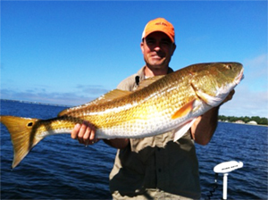 Destin Inshore Fishing - Bull Red