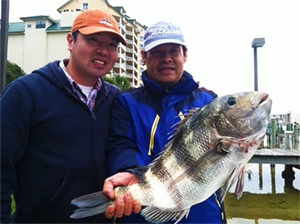 Destin Inshore Fishing - Sheepshead