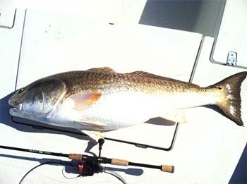 28poundRedfish
