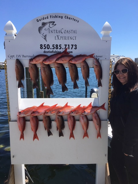 Vermillion Snapper season in Destin FL